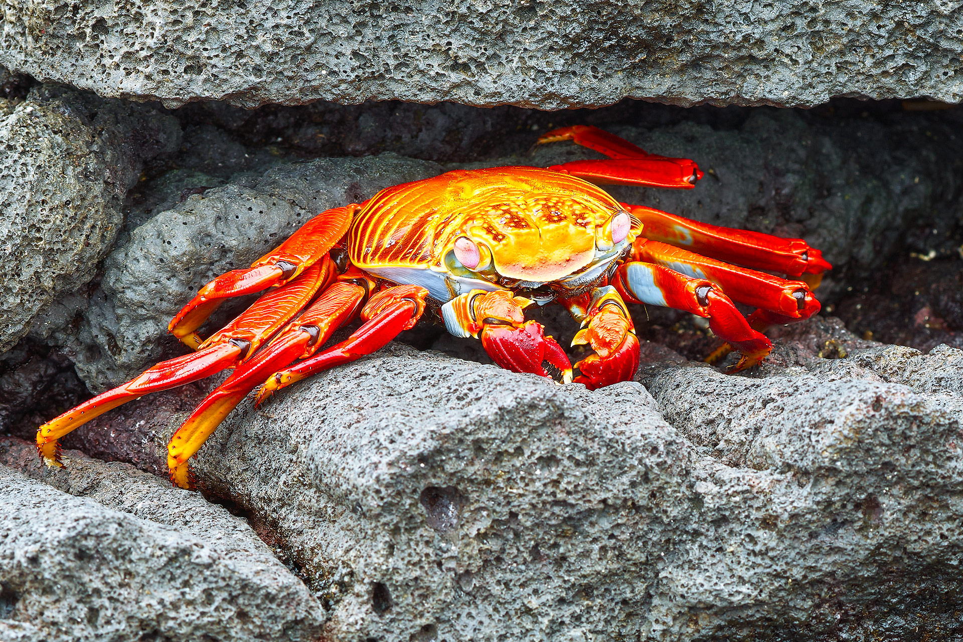 Crab Closeup