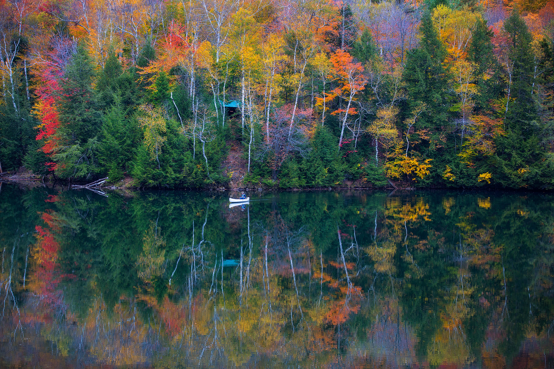 Andrei Duman Fall Trees Vermont 02