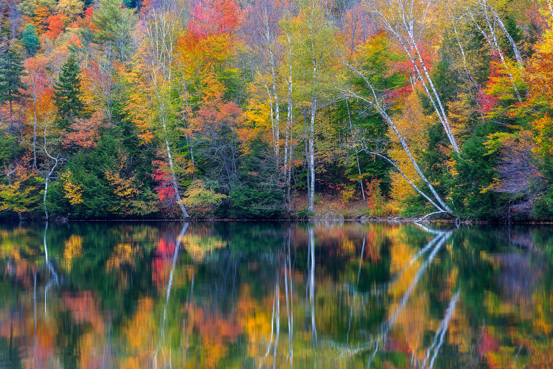 Andrei Duman Fall Trees Vermont 01